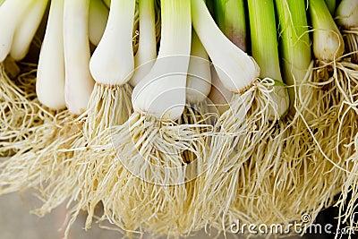 Bunch of garlic fresh raw vegetables food