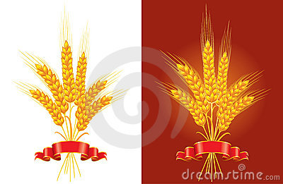 Bunch of golden wheat