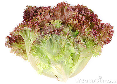 Bunch lettuce leaves