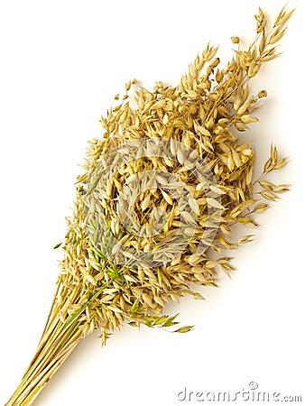 Bunch of oat