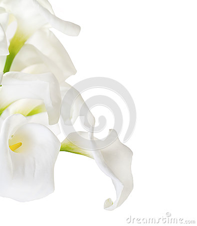 Free Bunch Of Cala Lilies Royalty Free Stock Image - 30244006