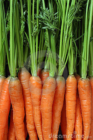 Free Bunch Of Carrots Royalty Free Stock Images - 19709789