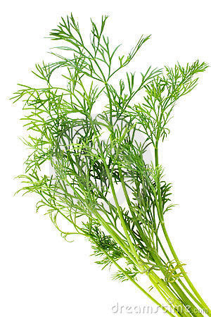 Free Bunch Of Dill Stock Photography - 16233382