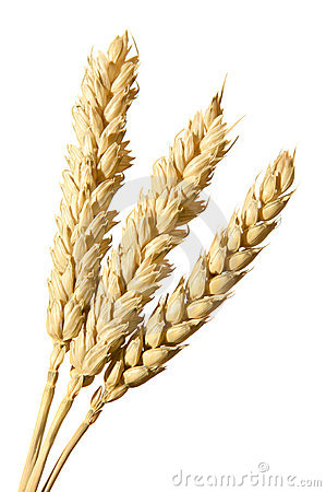 Free Bunch Of Wheat Ears Stock Image - 19717411