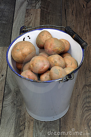 Bunch of potatoes in an old enamel bucket
