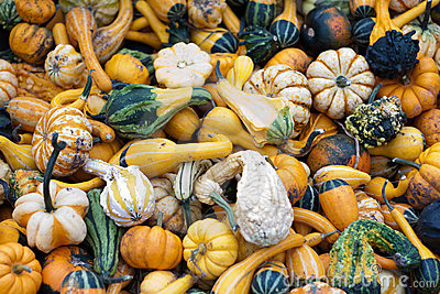 Bunch of pumpkins