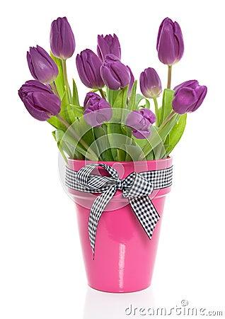 purple tulips bunch