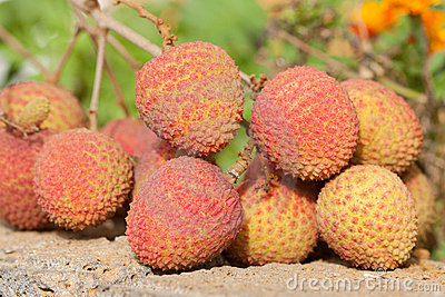 Bunch of ripe litchi