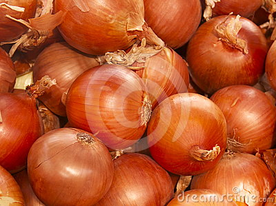 Bunch of Ripe Onion