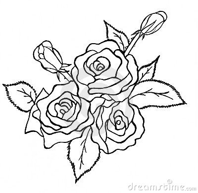 Bunch of roses sketch