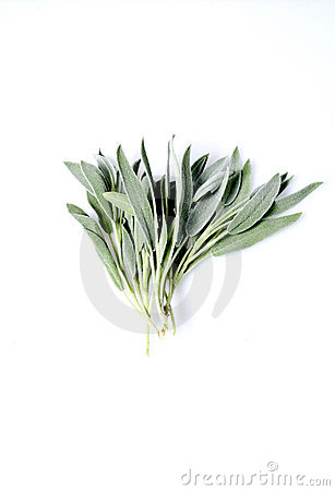 Free Bunch Sage, White Background, Copy Space Royalty Free Stock Photo - 12561255