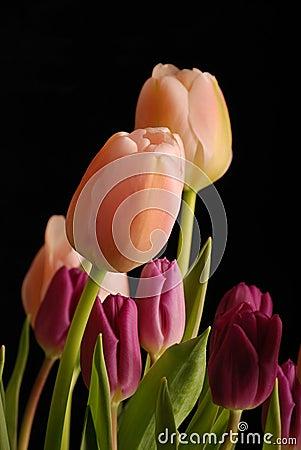 Bunch of tulips 2