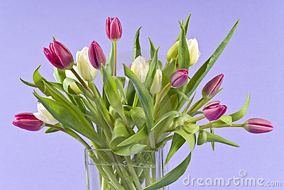 Bunch of Tulips in a Glass Vase
