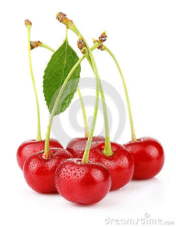 Bunch of wet ripe cherry berries with green leaf