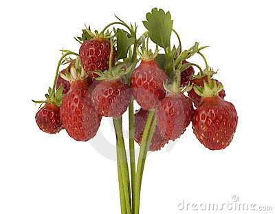 Bunch of wild strawberry