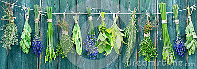 Bunches of different herbs