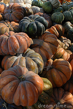 Bunches of Multicolored Pumpkins