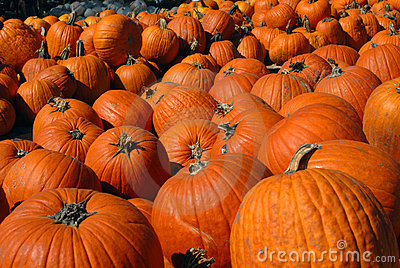 Bunches of Pumpkins
