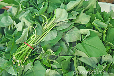 Bunches of spinach