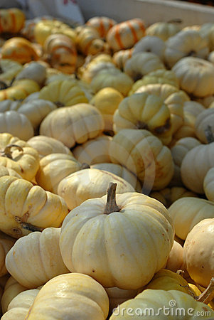 Bunches of White Pumpkins