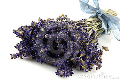 Bundle of dried lavender with a blue ribbon