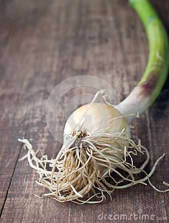 A bundle of green onion
