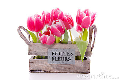 A bundle of pink tulips