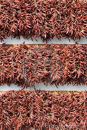 Bundles of dried red cayenne hot pepper vertical