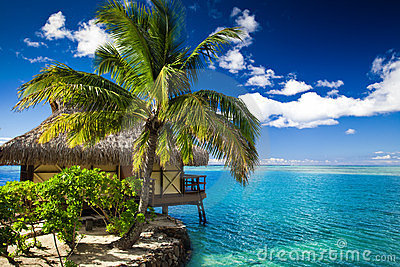 Bungalow and palm tree next to lagoon