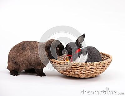 Bunnies Πάσχα