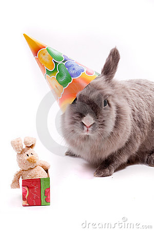Free Bunny And A Toy-bunny In The Box Royalty Free Stock Photography - 1804127