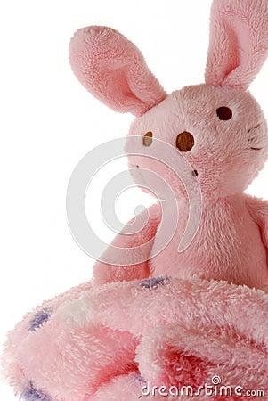 Bunny on a blanket.