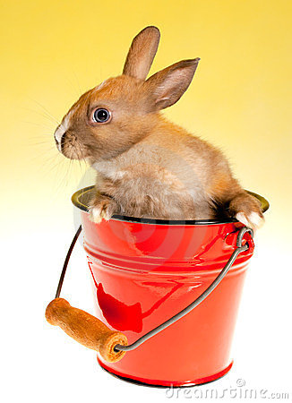 Bunny in bucket