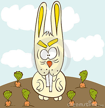 Bunny carrot field