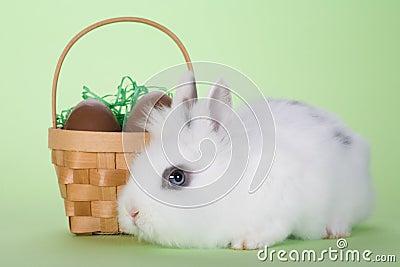Bunny with chocolate eggs