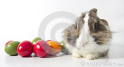 Bunny with colored eggs