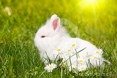 Bunny with daisies