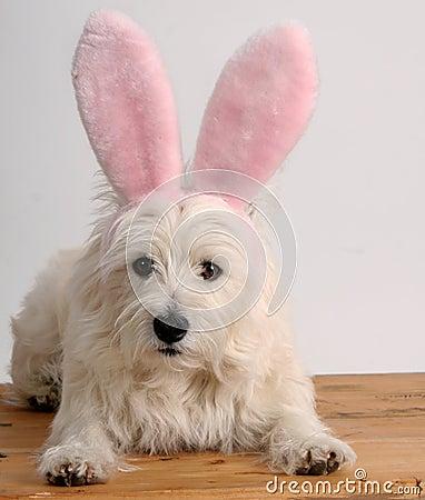 Bunny dog
