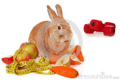 Bunny with fresh vegetables