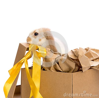 Bunny in a gift box with a yellow ribbon