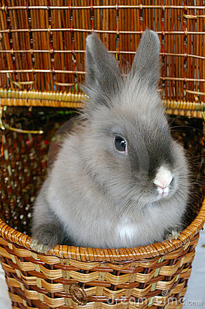 Free Bunny In A Basket Royalty Free Stock Photos - 1277568