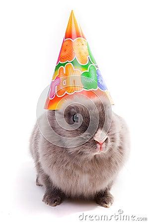 Free Bunny In A Happy Birthday Cap Royalty Free Stock Photo - 1849575