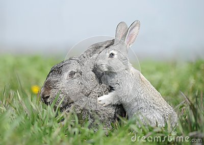 bunny mom and baby rabbit stock photos image 24979303