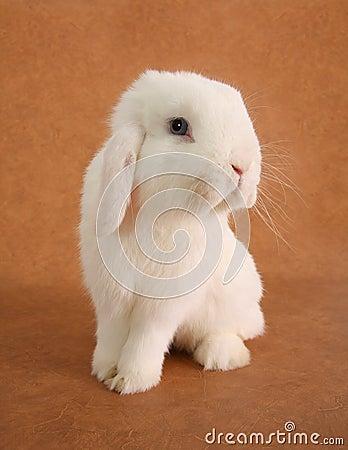 Free Bunny Rabbit Stock Image - 13426081