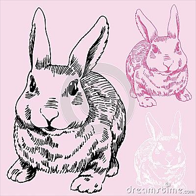 Bunny / Rabbit Sketch