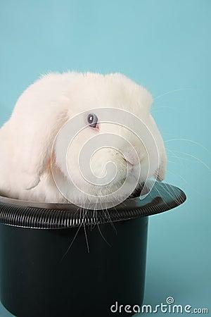 Bunny rabbit in a top hat