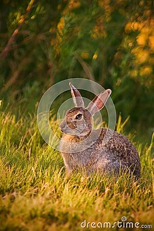 Bunny In Sunlight