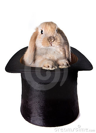 Free Bunny Surprise Royalty Free Stock Photos - 7560578