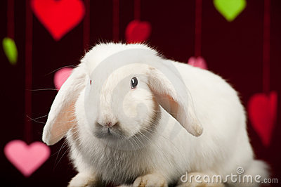 Bunny with valentines. Valentine rabbit