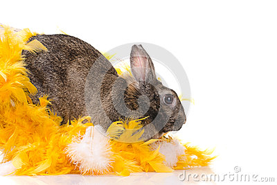 Bunny in yellow feathers